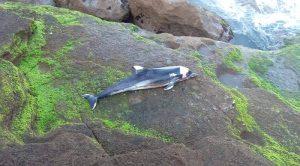 صورة.. العثور على دلفين ميت بشط بحر مدينة سلا