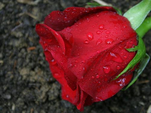 «تريكة سعدي بولدي».. ونصرة قضايا الإسلام