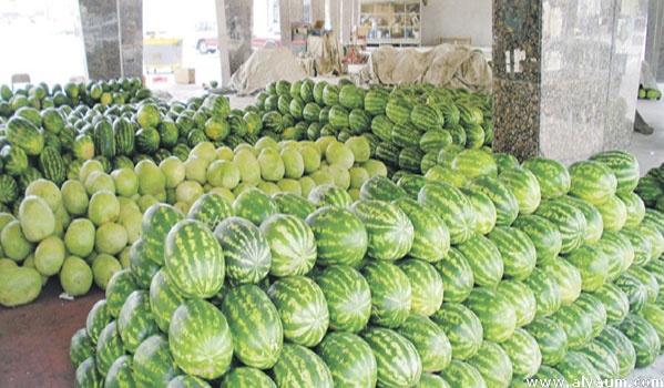 فيديو.. المجلس الإقليمي لزاكورة يرفع ملتمس الوقف المؤقت لزراعة الدلاح