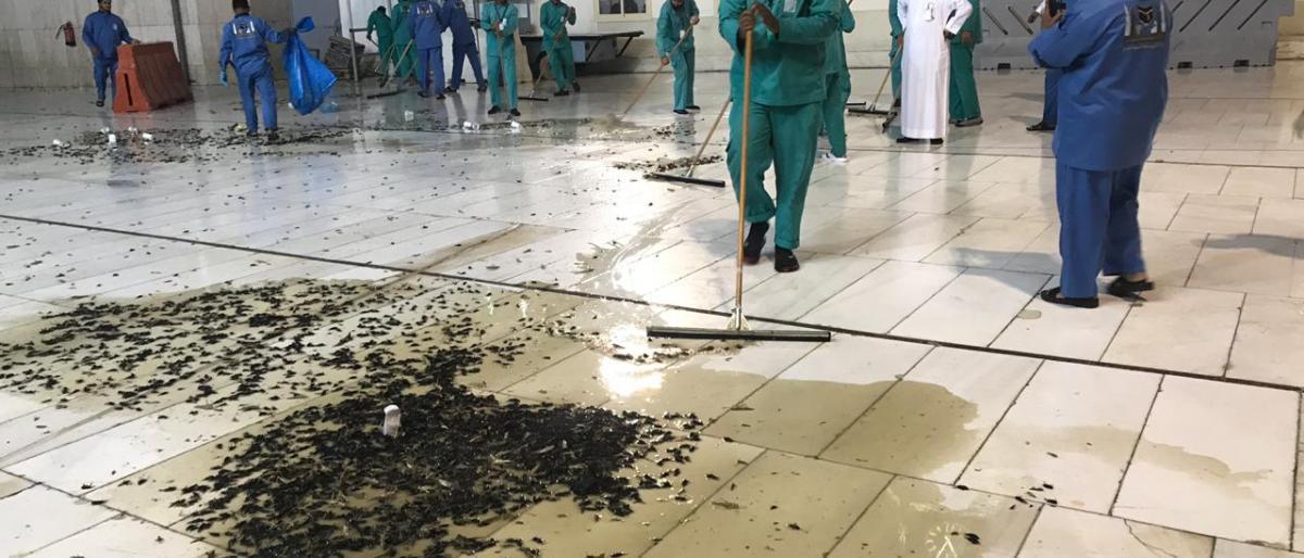 أسراب الجراد والصراصير تغزو السعودية بشكل غير مسبوق