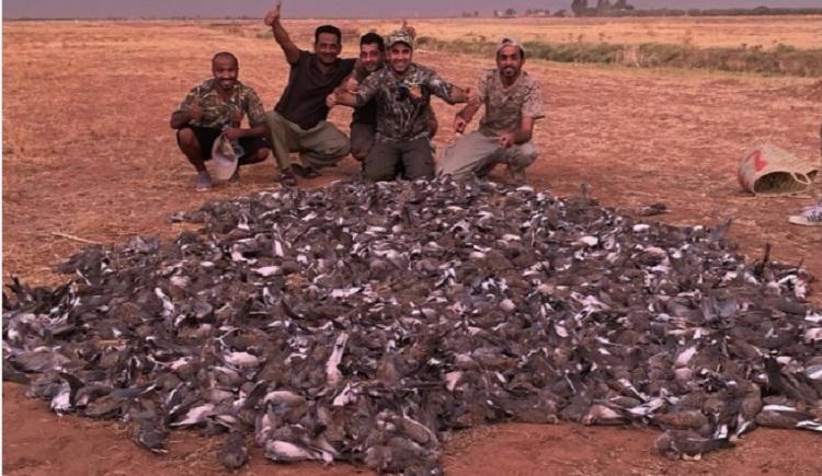 فيديو.. خليجيون يقومون بمجزة في حق طائر القمري ضواحي مراكش (أكثر من 1400 طائر)