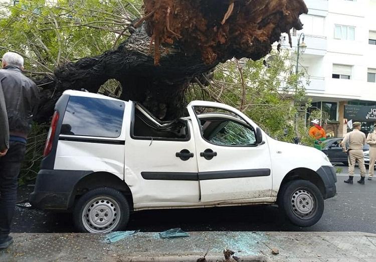 صورة.. سقوط شجرة بأكدال-الرباط على سيارة بعدما اقتلعتها الرياح الشديدة